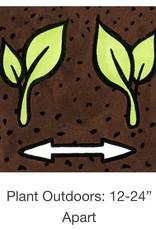 Seed Savers Exchange Pepper Seeds - Fatalii