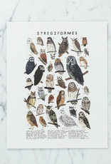"""Kelzuki Strigiformes Print by Kelzuki - 8 x 10"""""""
