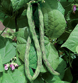 Seed Savers Exchange Bean Seeds - Rattlesnake Snap