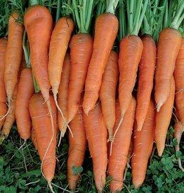 Seed Savers Exchange Carrot Seeds - St Valery