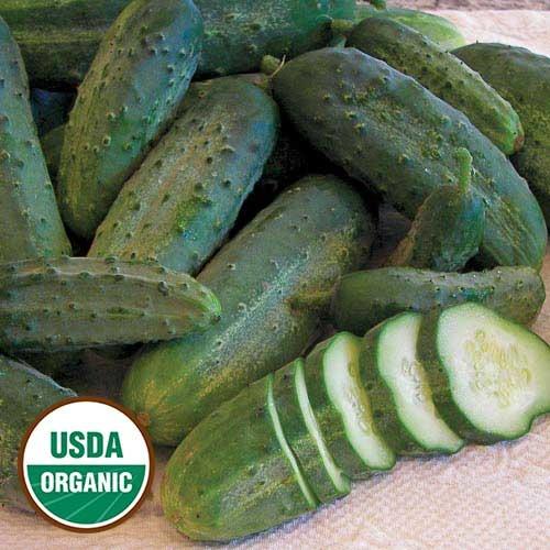 Seed Savers Exchange Cucumber Seeds - Snow's Fancy Pickling (organic)