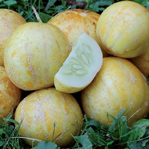 Seed Savers Exchange Cucumber Seeds - True Lemon (organic)