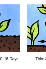 Seed Savers Exchange Flower Seeds - Chima Family Heirloom Poppy (organic)