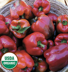 Seed Savers Exchange Pepper Seeds - Wisconsin Lakes (organic)
