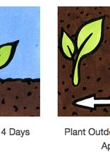 Seed Savers Exchange Pepper Seeds - Wisconsin Lakes (organic)