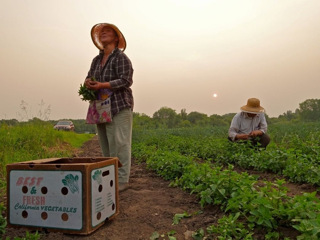 6/18/2021 Foundry Giving Friday: Hmong American Farmers Association