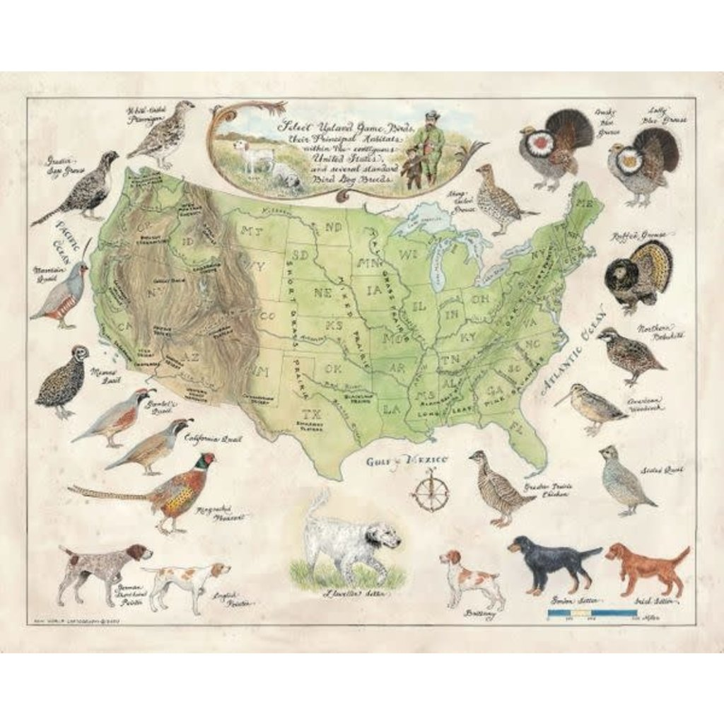 New World Cartography Upland Game of the US by New World Cartography
