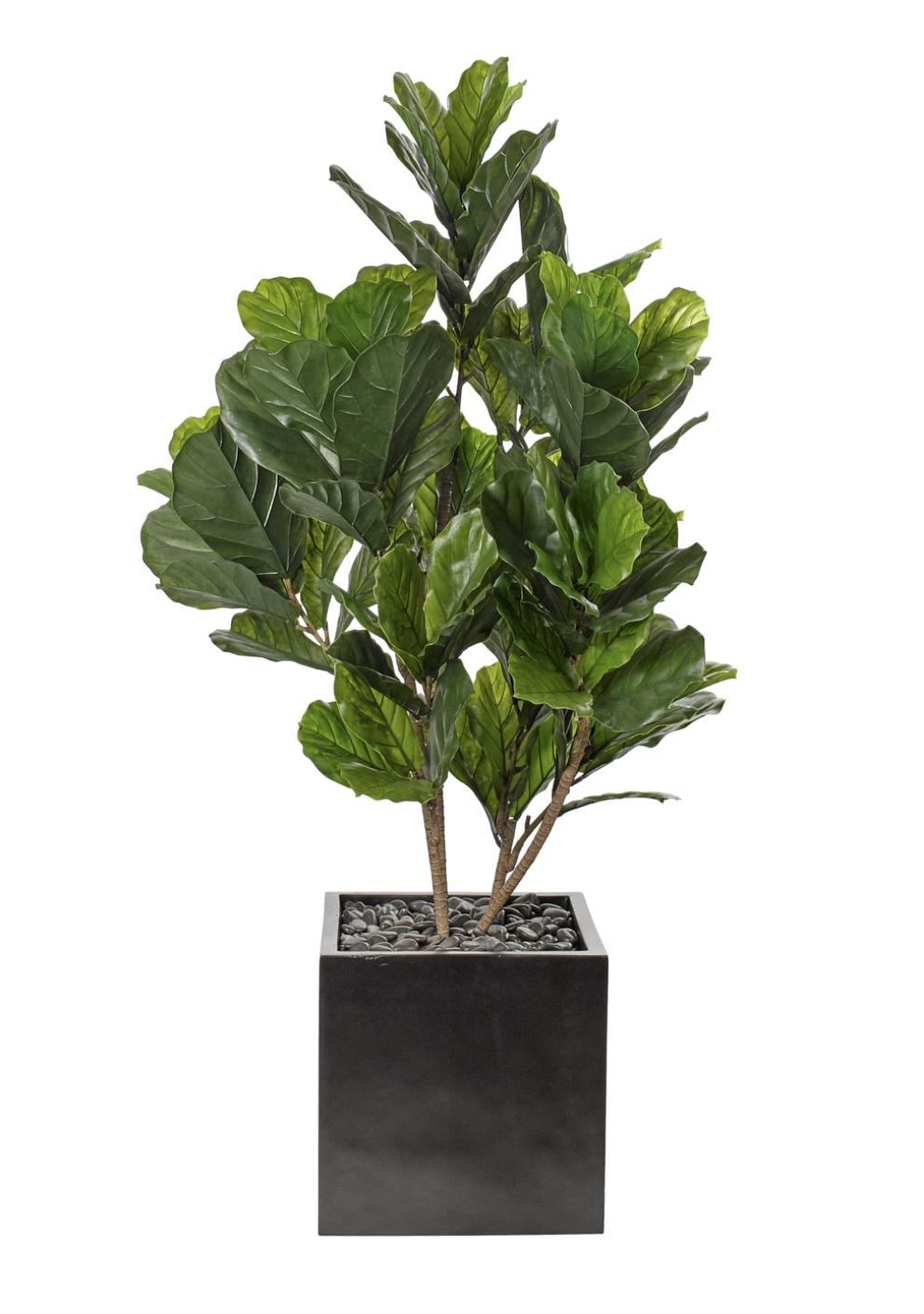 NDI Fiddle Leaf In Concrete Planter