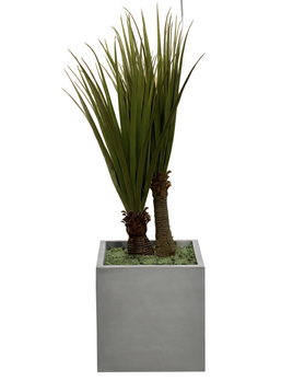 NDI Pandanus In Concrete Planter