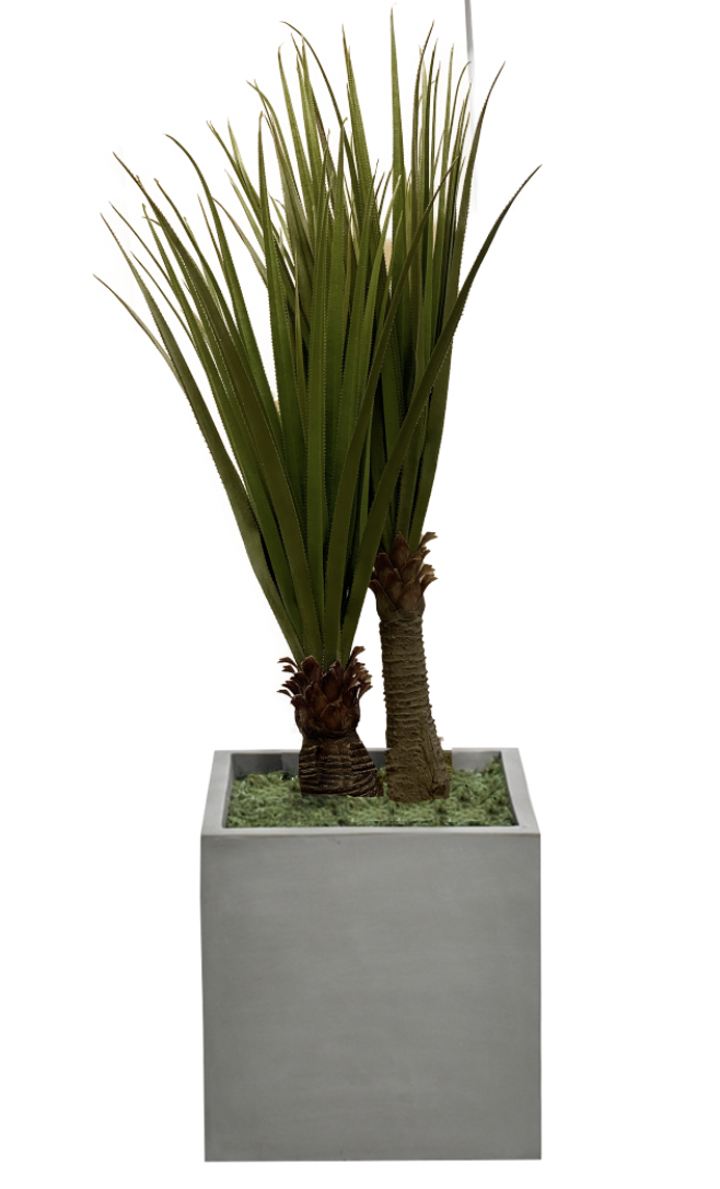 NDI Pandanus In Concrete Planter