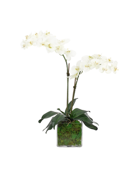 NDI Orchid in Glass Vase