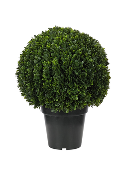 NDI Boxwood Topiary