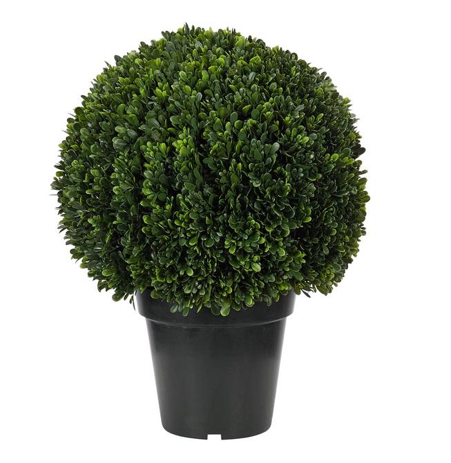NDI Boxwood Topiary