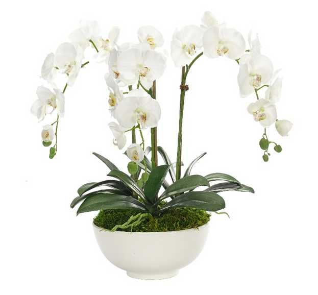 NDI Orchid in Ceramic White Bowl