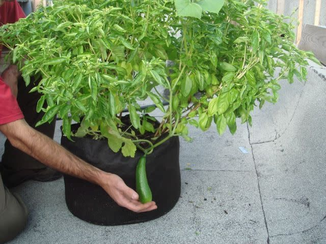 Smart Pot Smart Pot 10 gallons