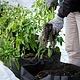 Formation 12 septembre – Fermeture du jardin, conservation des semences et verdures d'intérieur