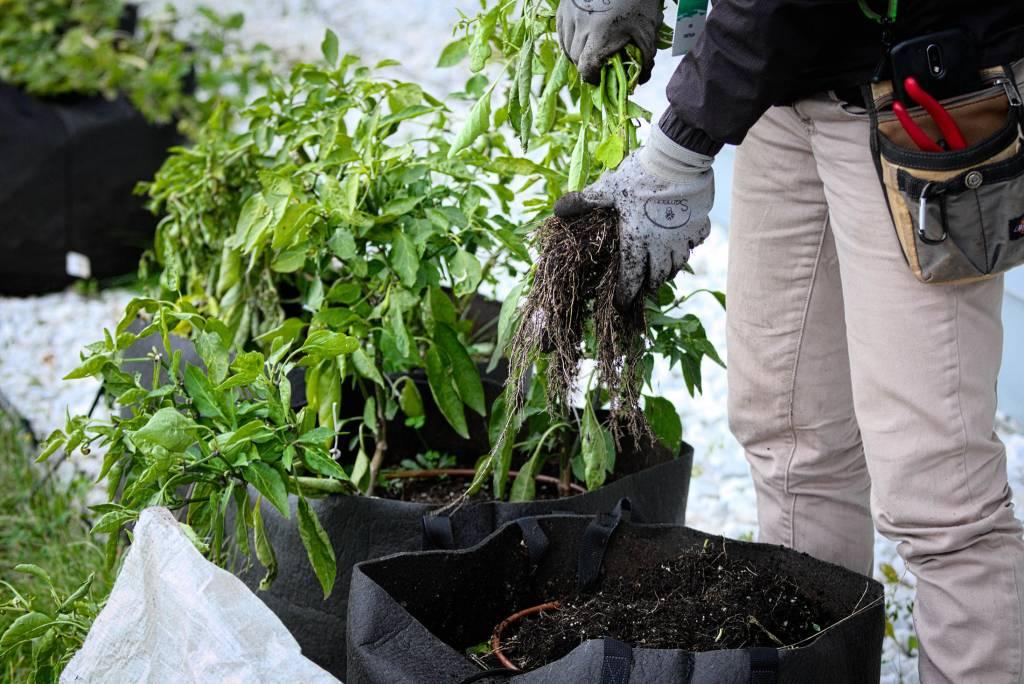 Formation – Fermeture du jardin, conservation des semences et verdures d'intérieur