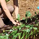 Formation 15 mai - Installer, planter et apprivoiser ses cultures urbaines