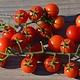 Jardin de l'Écoumène Tomate Petit Moineau