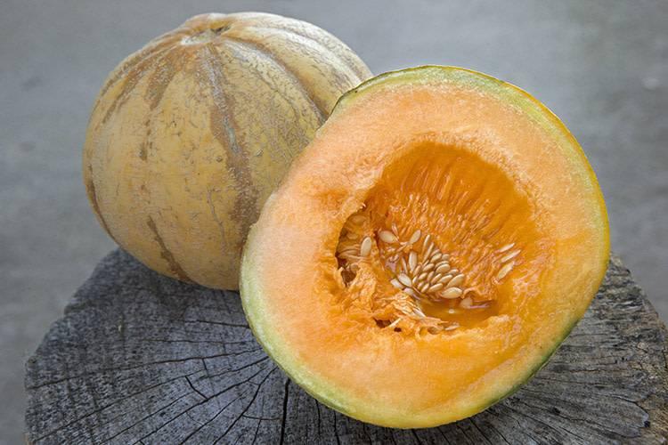 Jardin de l'Écoumène Melon brodé d'Oka