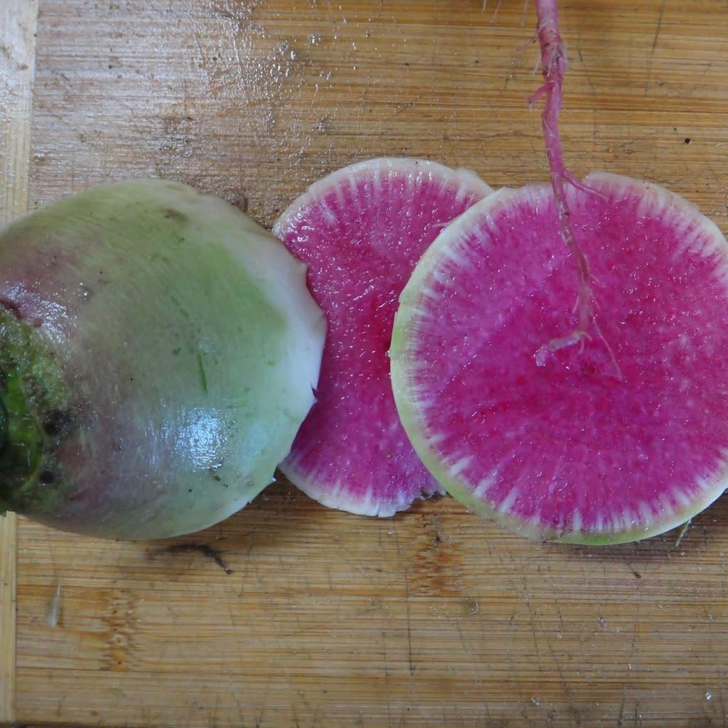 Radis Melon D'eau