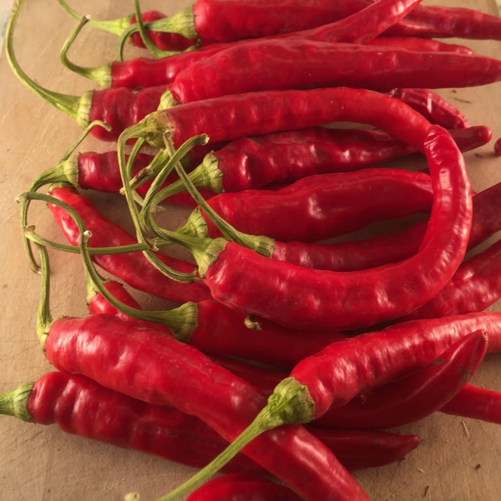 Piment fort Red Rocket