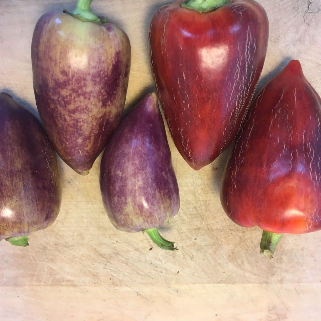 Semence Tourne-sol Poivron doux Violet Sparkle