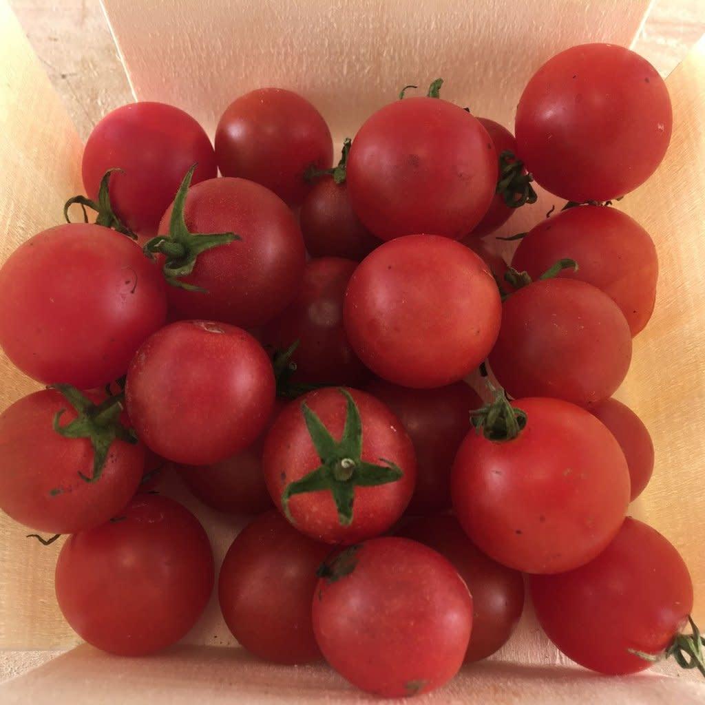 Semence Tourne-sol Tomate cerise rouge Peacevine