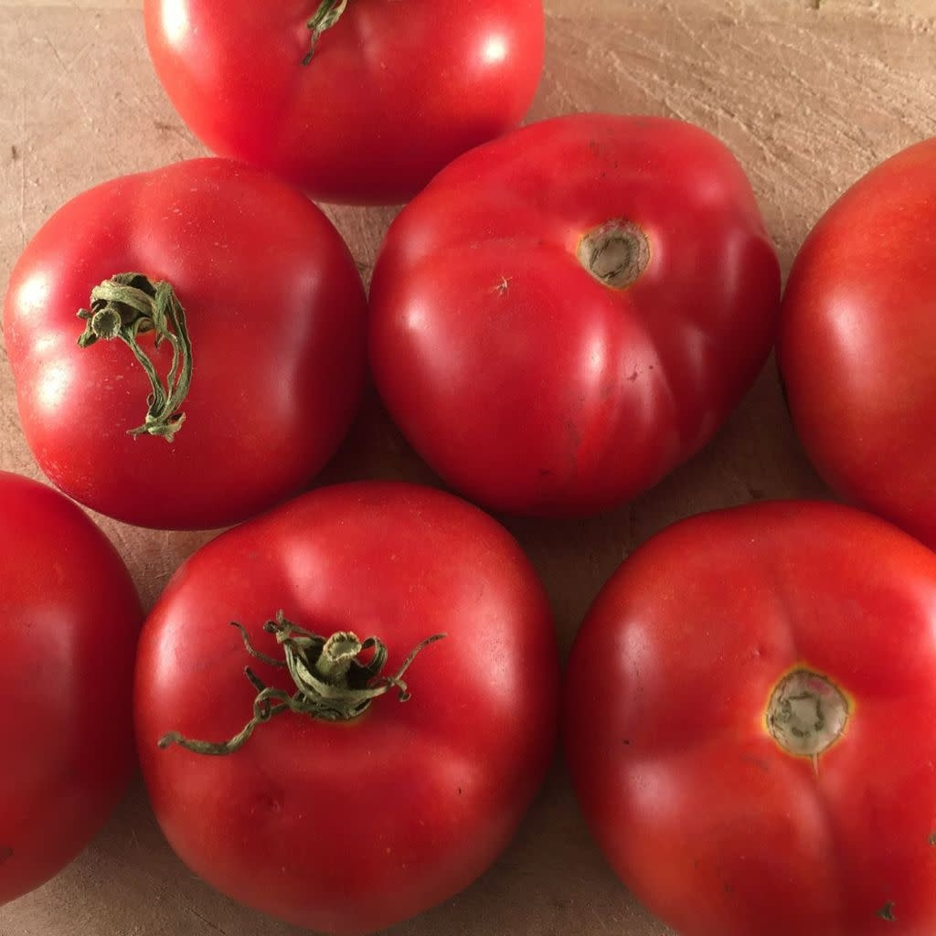 Tomate rouge Québec #13