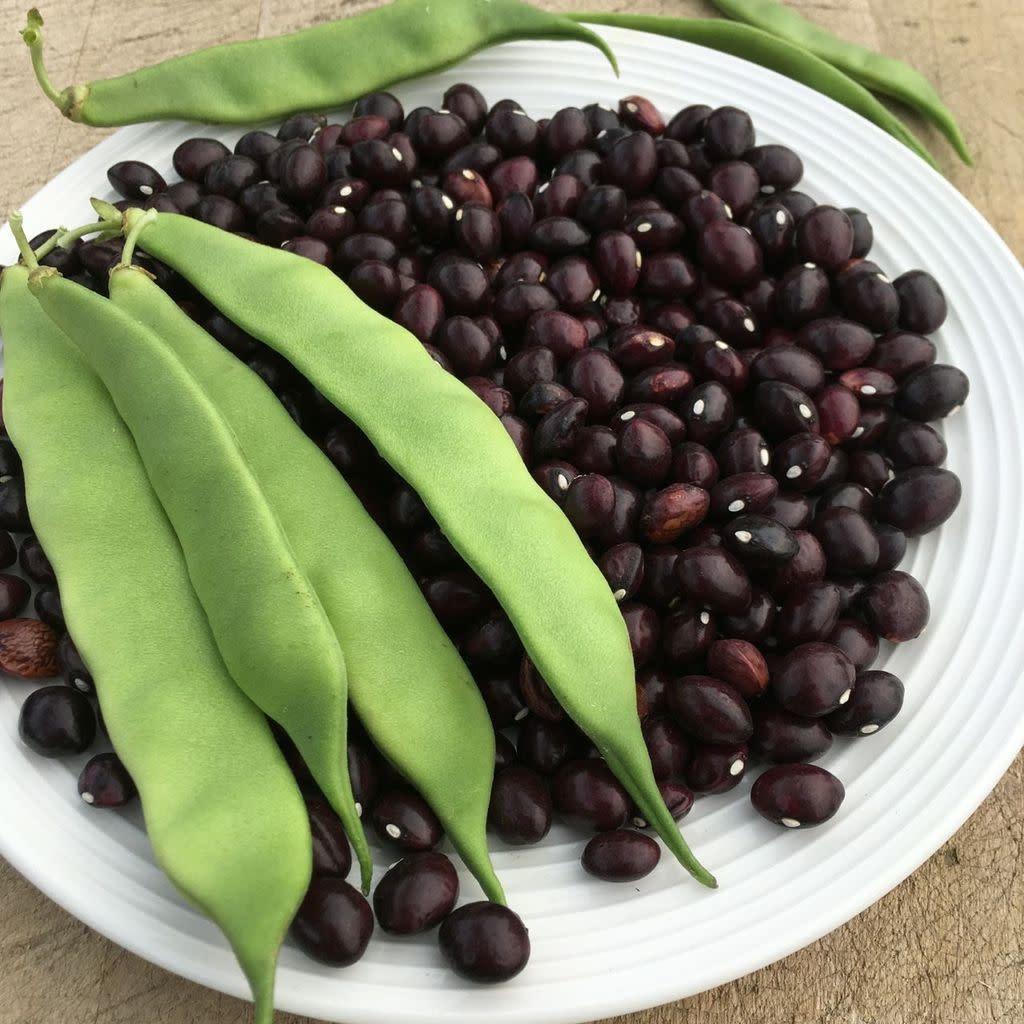 Semence Tourne-sol Haricot grimpant True Red Cranberry