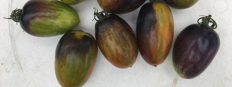 Jardin de l'Écoumène Tomate cerise Brad's Atomic