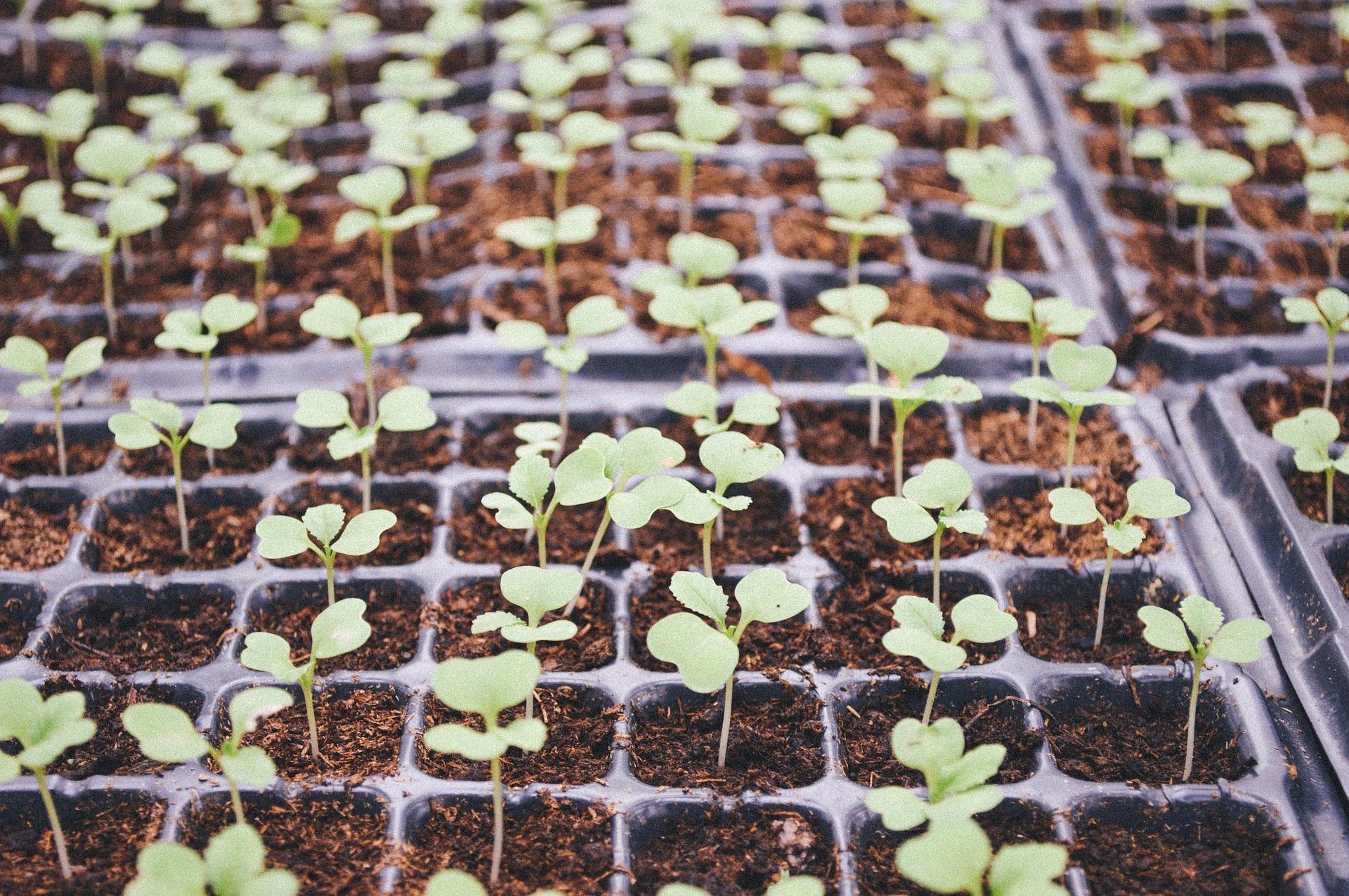 Formation 28 février - Design de votre jardin urbain et planification des semis