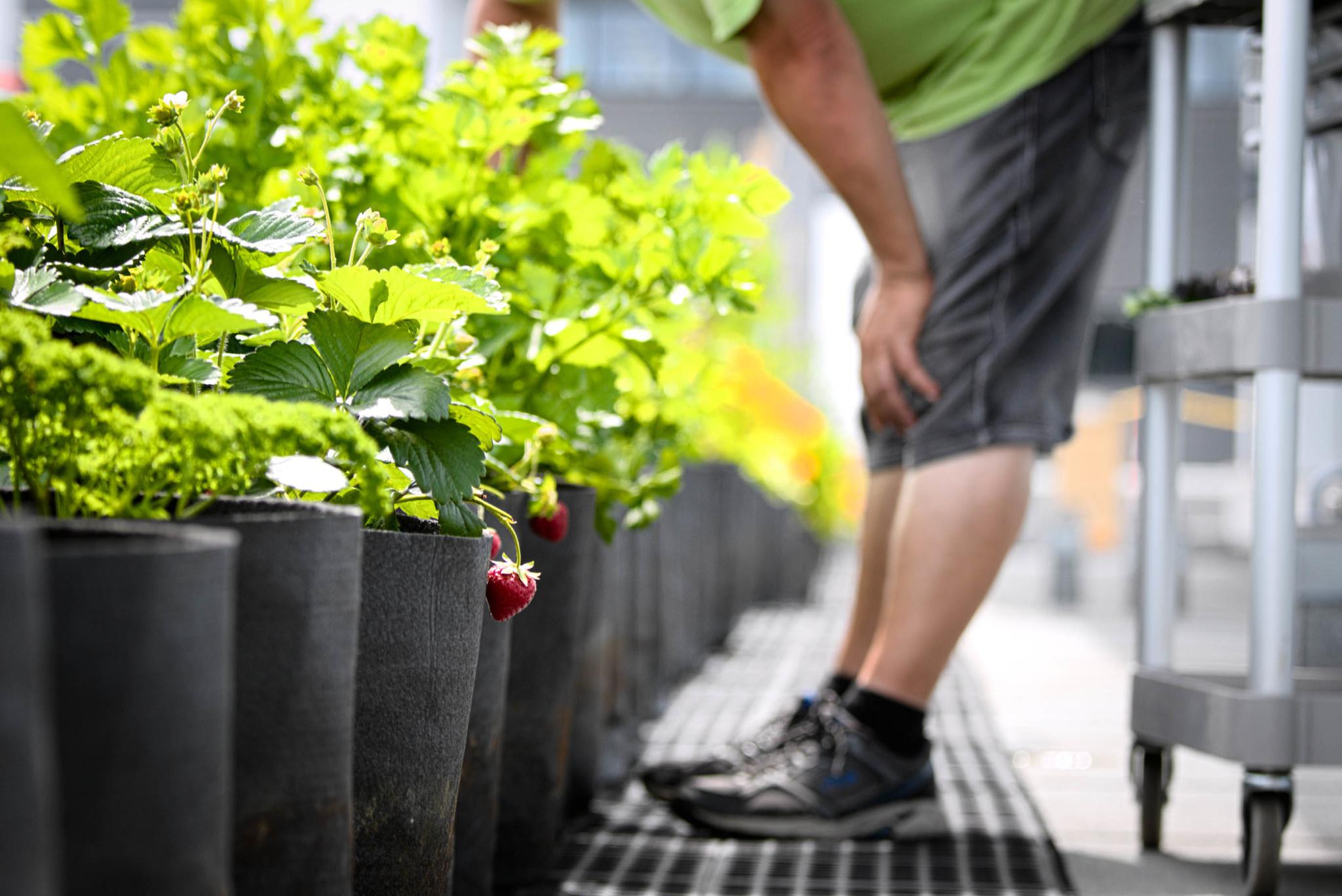 Formation 11 juillet - Routine d'entretien pour un jardin en santé