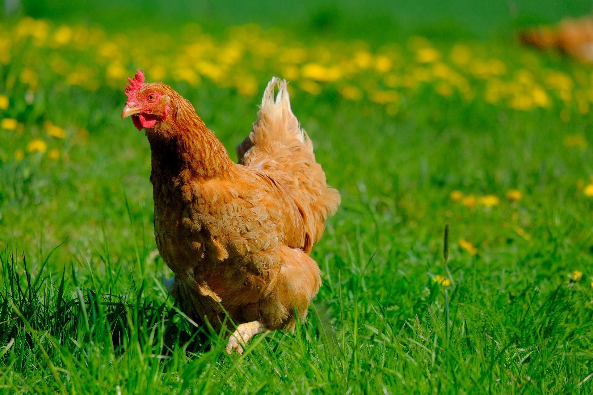 Formation 3 avril - Poulettes urbaines