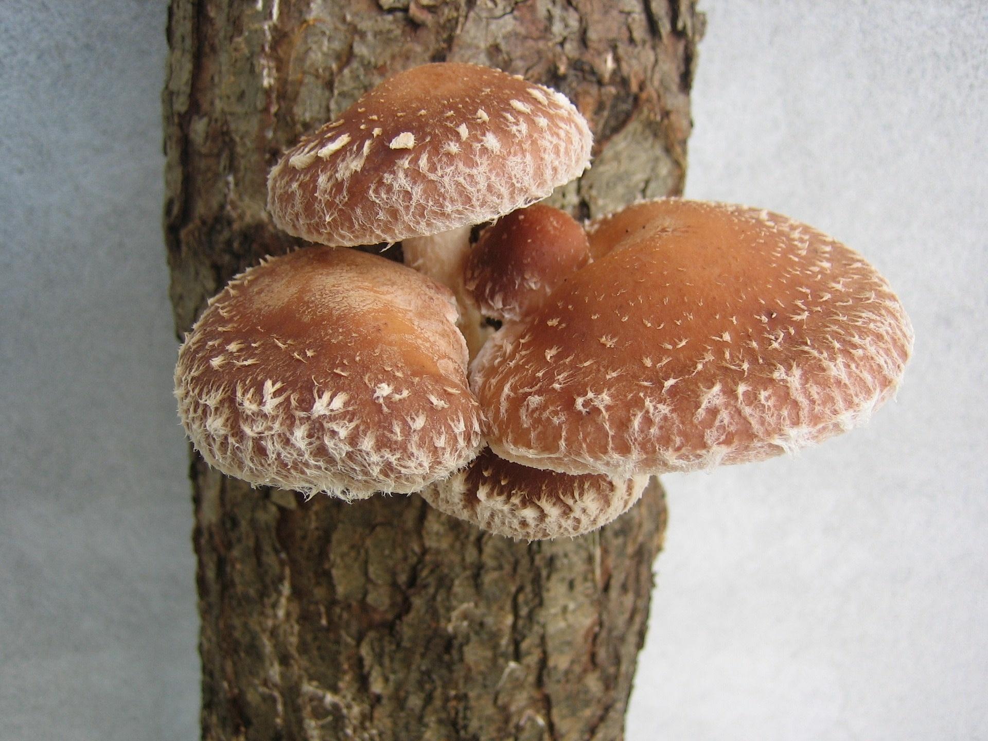 Formation 24 avril - Introduction à la culture de champignons