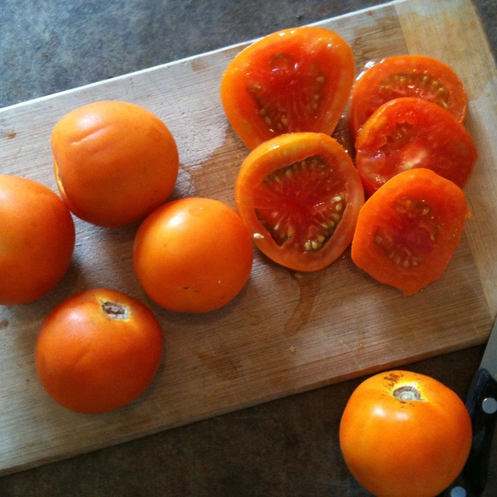Semence Tourne-sol Tomate jaune Flammée