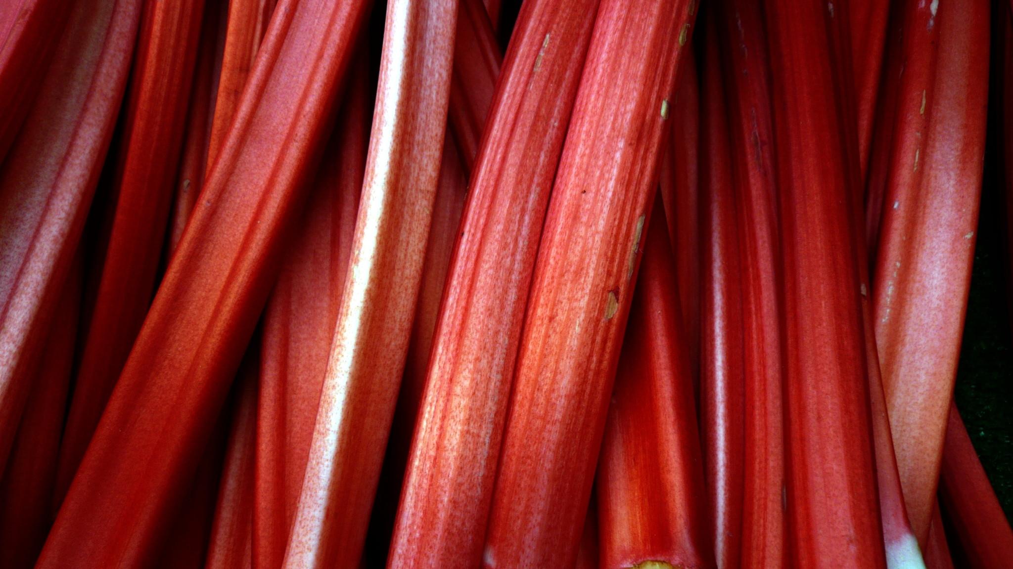 Rhubarbe Canada Red