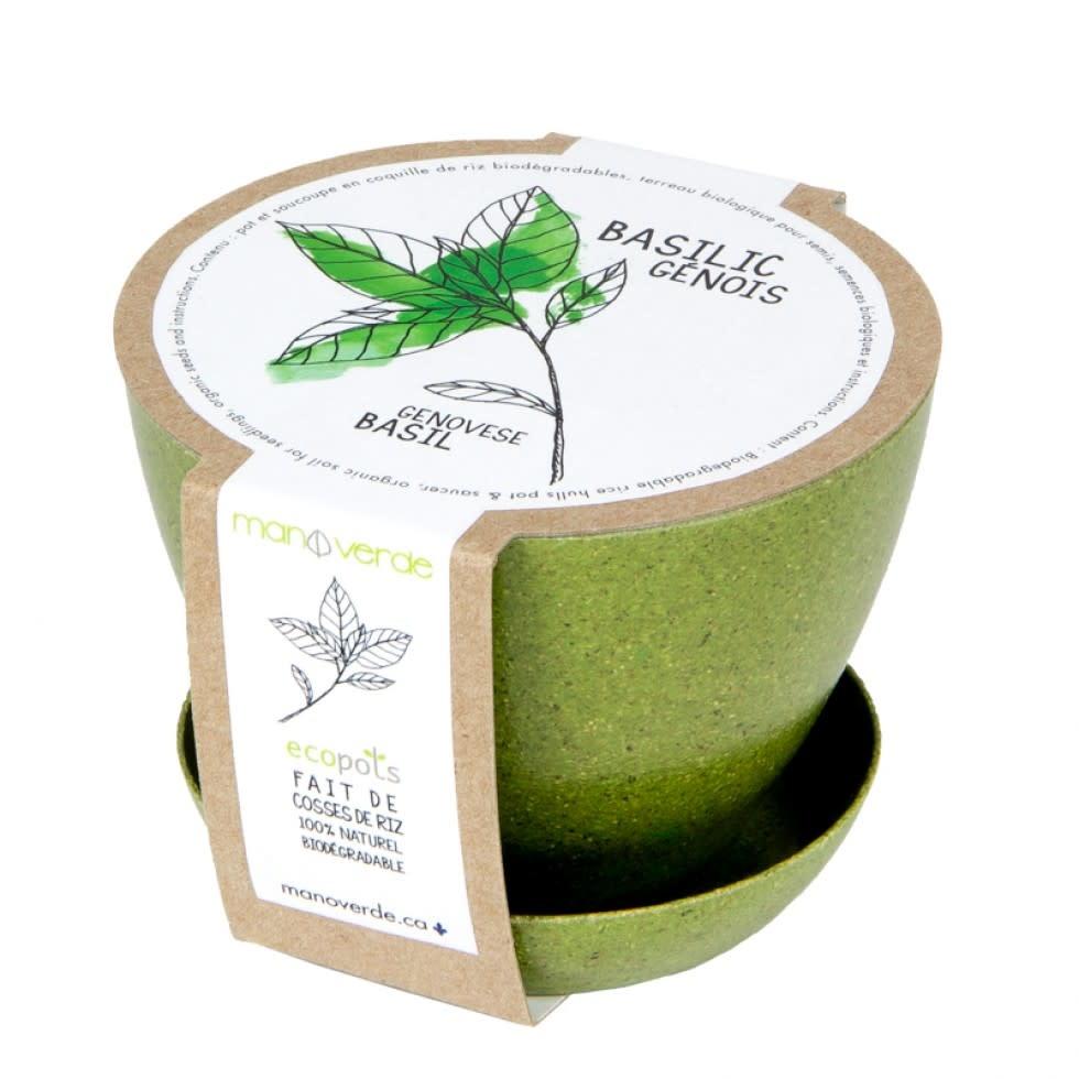 Mano Verde Minipot - Basilic génois