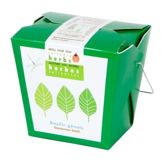 Mano Verde Herbes culinaires - Basilic génois