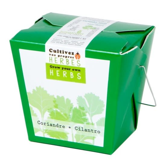 Mano Verde Herbes culinaires - Coriandre