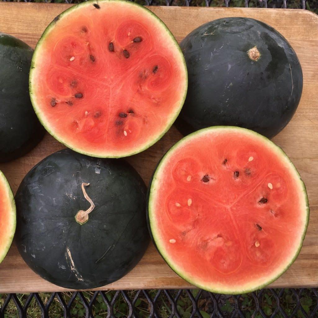 Semence Tourne-sol Melon d'eau Blacktail Mountain