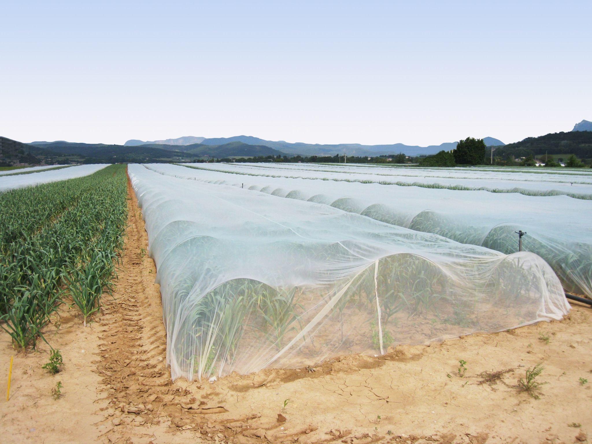 ProtekNet Filet d'exclusion anti-insectes - vendu au mètre