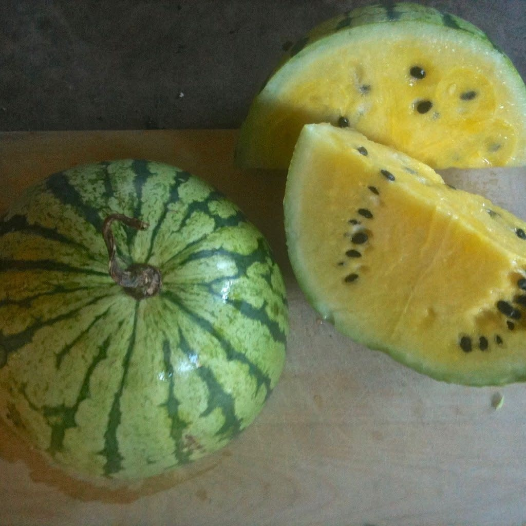 Semence Tourne-sol Melon D'eau Early Moonbeam