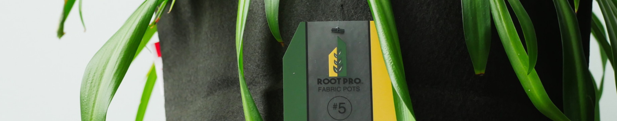 RootPro