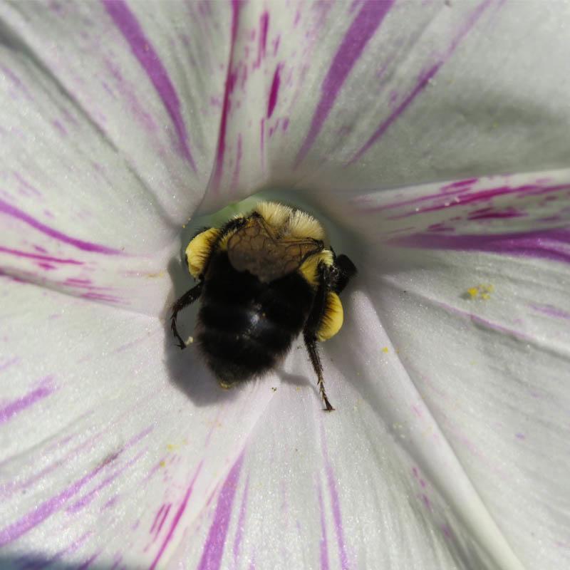 """Animation """"Les insectes et la biodiversité au jardin"""""""
