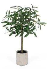 Melrose International Olive Topiary