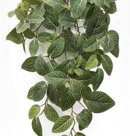 Melrose International White Vein Foliage Bush
