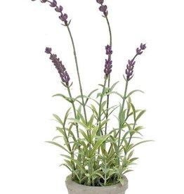Melrose International Potted Lavender