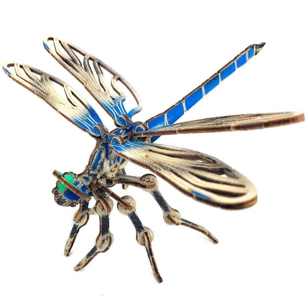 JCR Arthropoda - Dragonfly