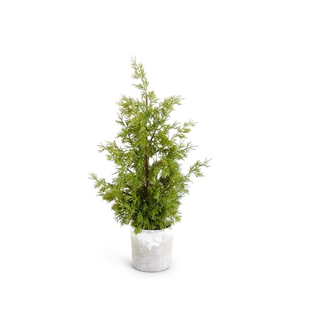 K & K Interiors Cypress In Grey Pot With Faux Dirt 24""